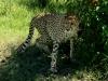 kenya-and-tanzania-221