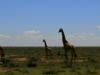 kenya-and-tanzania-295
